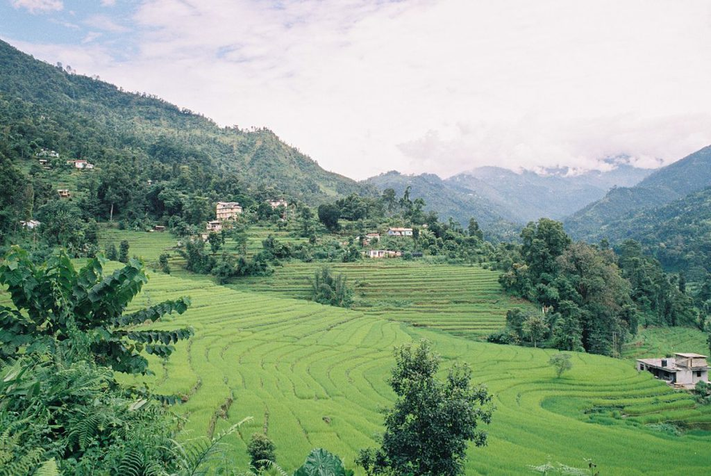 1200px-Terraced_rice_fields_of_Sikkim_India